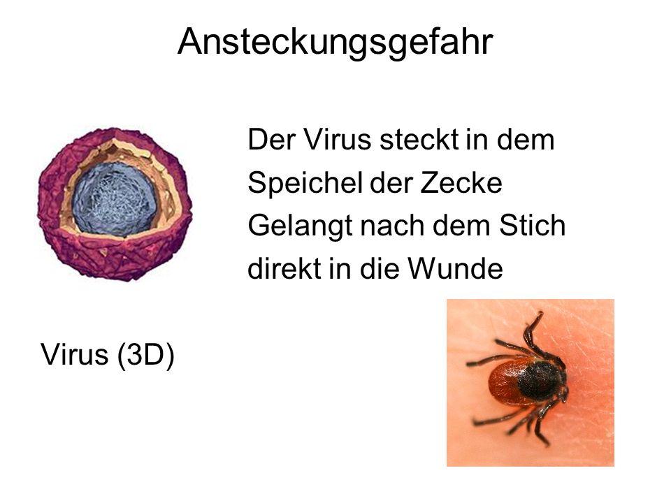 Ansteckungsgefahr Der Virus steckt in dem Speichel der Zecke
