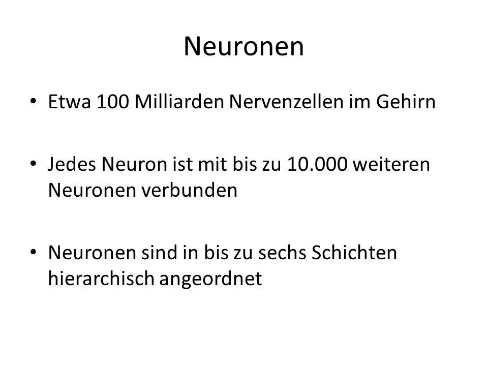 Neuronen Etwa 100 Milliarden Nervenzellen im Gehirn