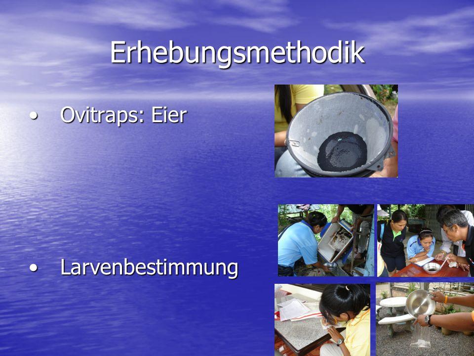 Erhebungsmethodik Ovitraps: Eier Larvenbestimmung