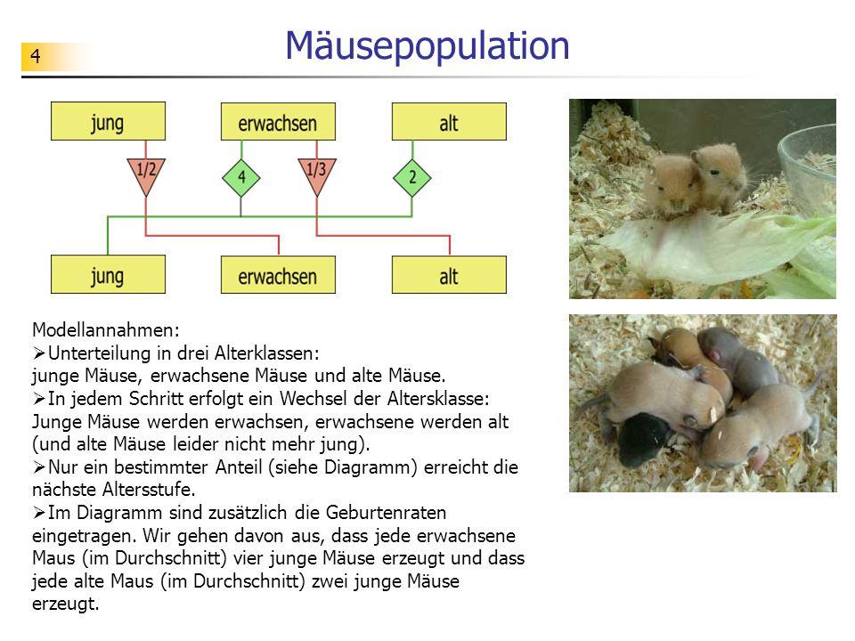 Mäusepopulation Modellannahmen: