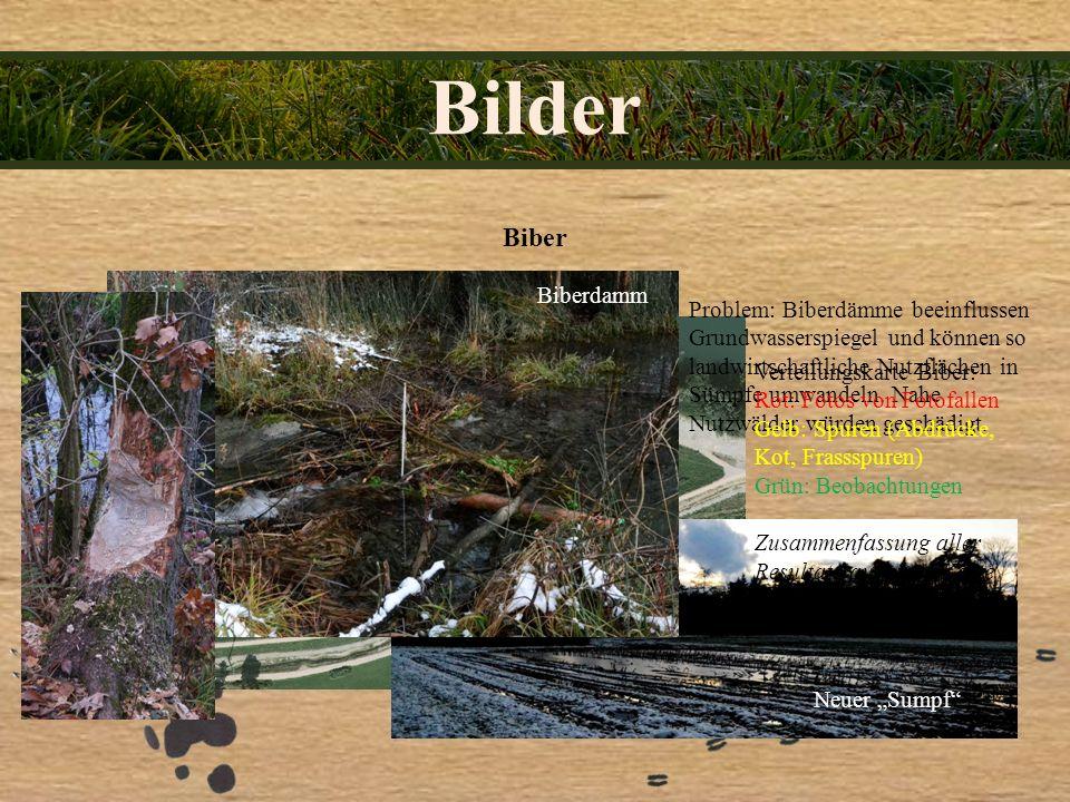 Bilder Biber Biberdamm