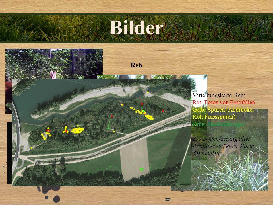 Bilder Reh Verteilungskarte Reh: Rot: Fotos von Fotofallen