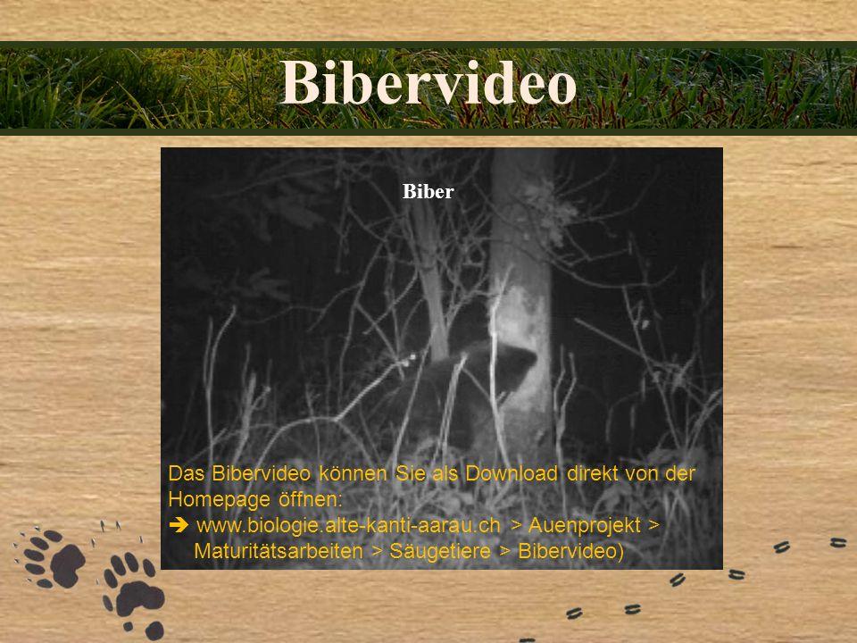 Bibervideo Biber. Das Bibervideo können Sie als Download direkt von der Homepage öffnen: