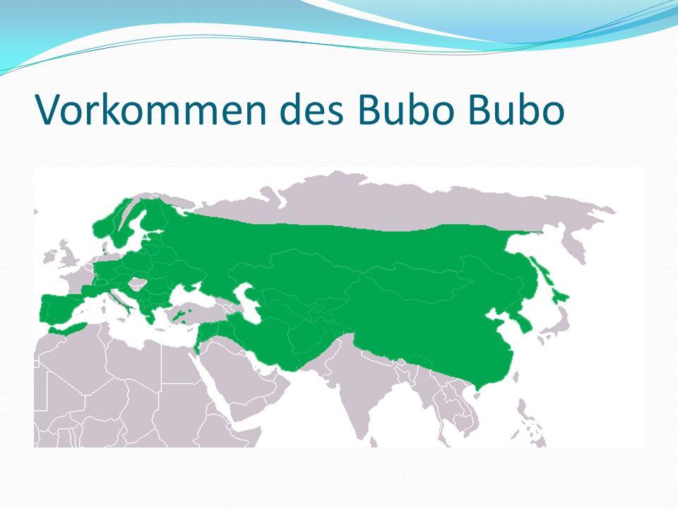 Vorkommen des Bubo Bubo