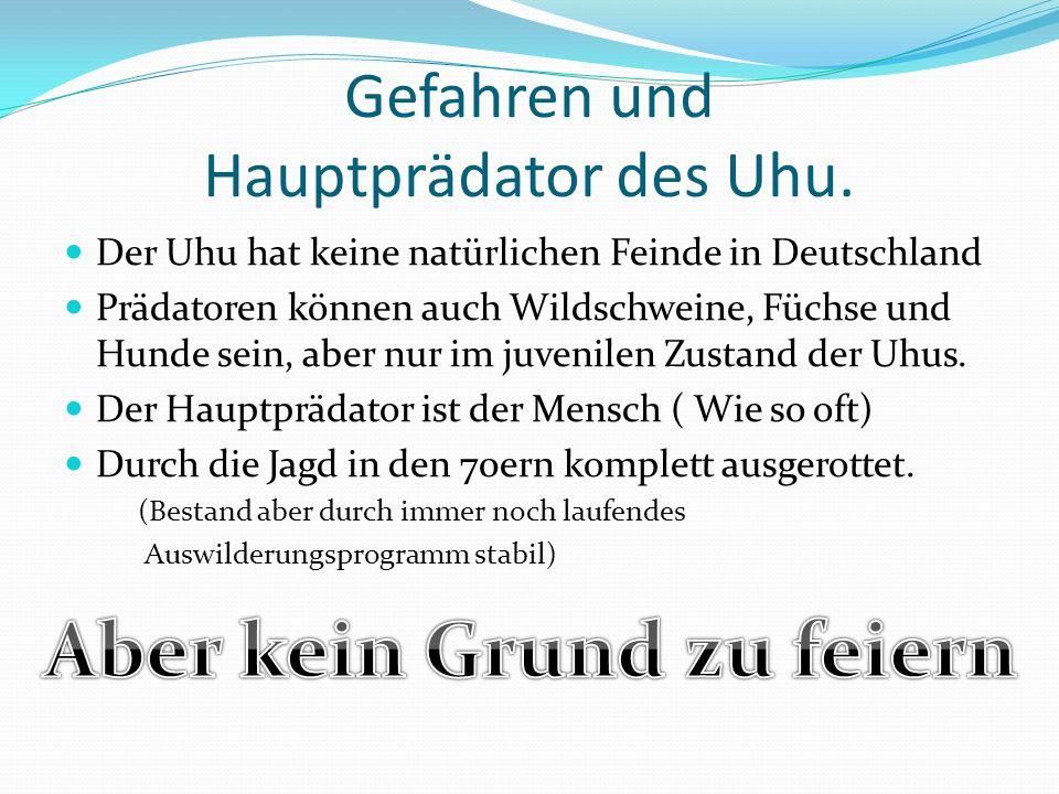 Gefahren und Hauptprädator des Uhu.