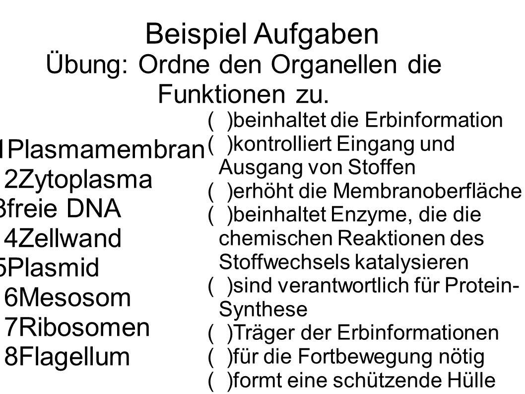 Übung: Ordne den Organellen die Funktionen zu.
