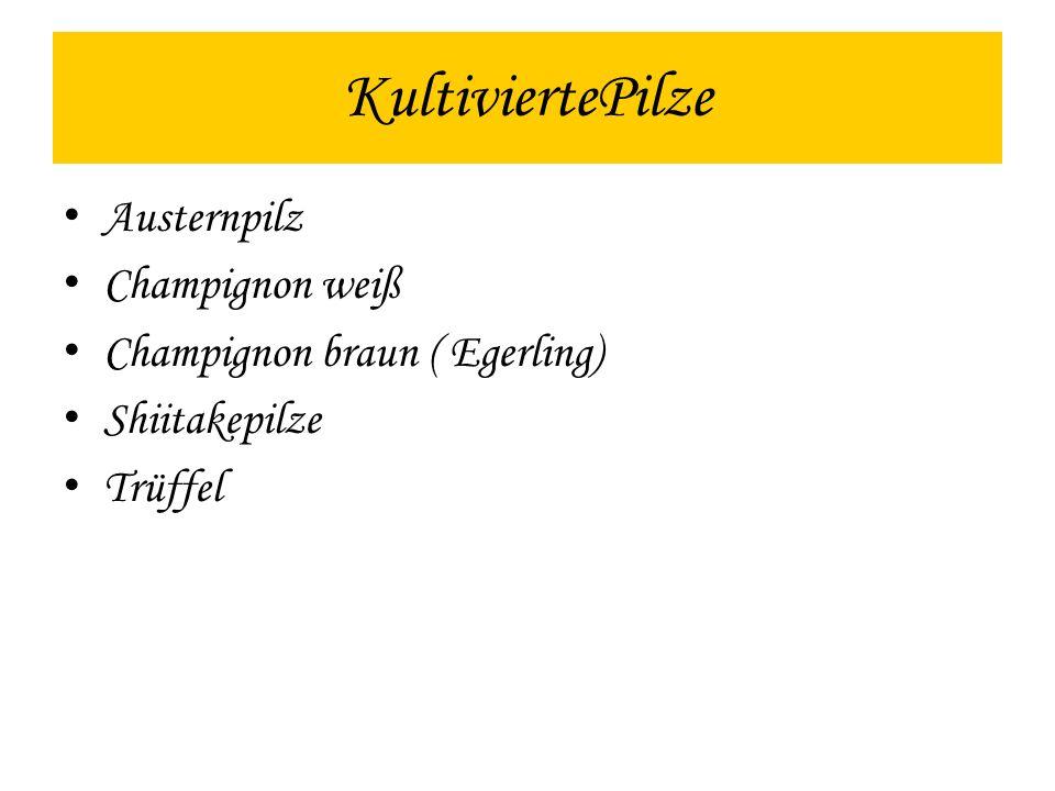 KultiviertePilze Austernpilz Champignon weiß