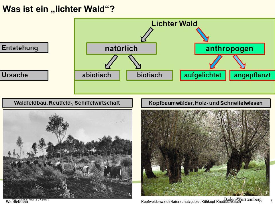 """Was ist ein """"lichter Wald"""