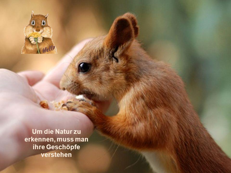 Um die Natur zu erkennen, muss man ihre Geschöpfe verstehen