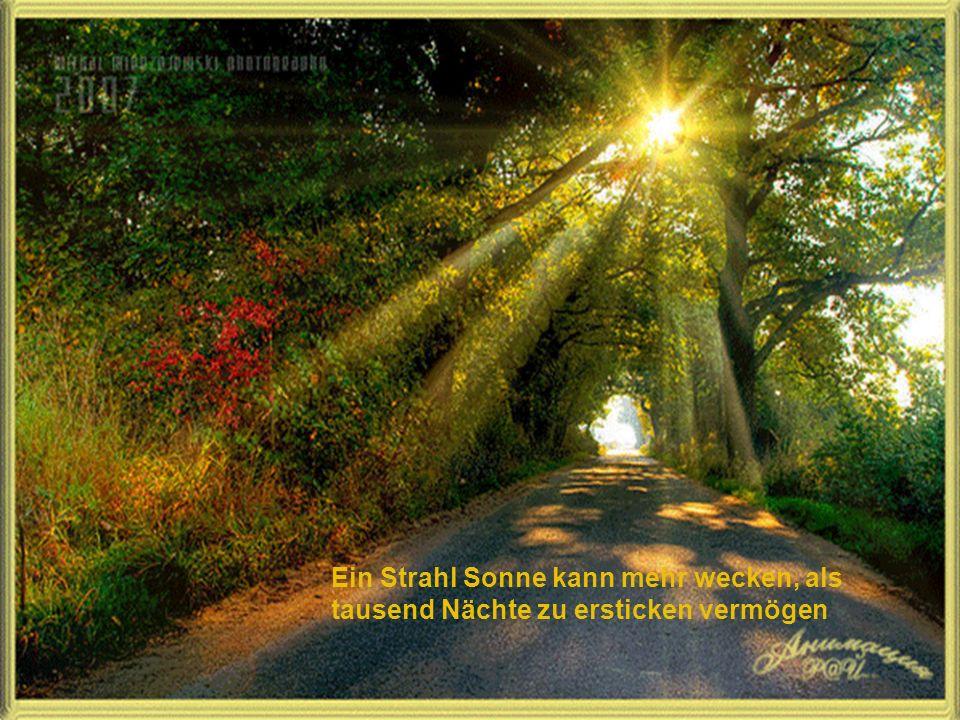 Ein Strahl Sonne kann mehr wecken, als tausend Nächte zu ersticken vermögen