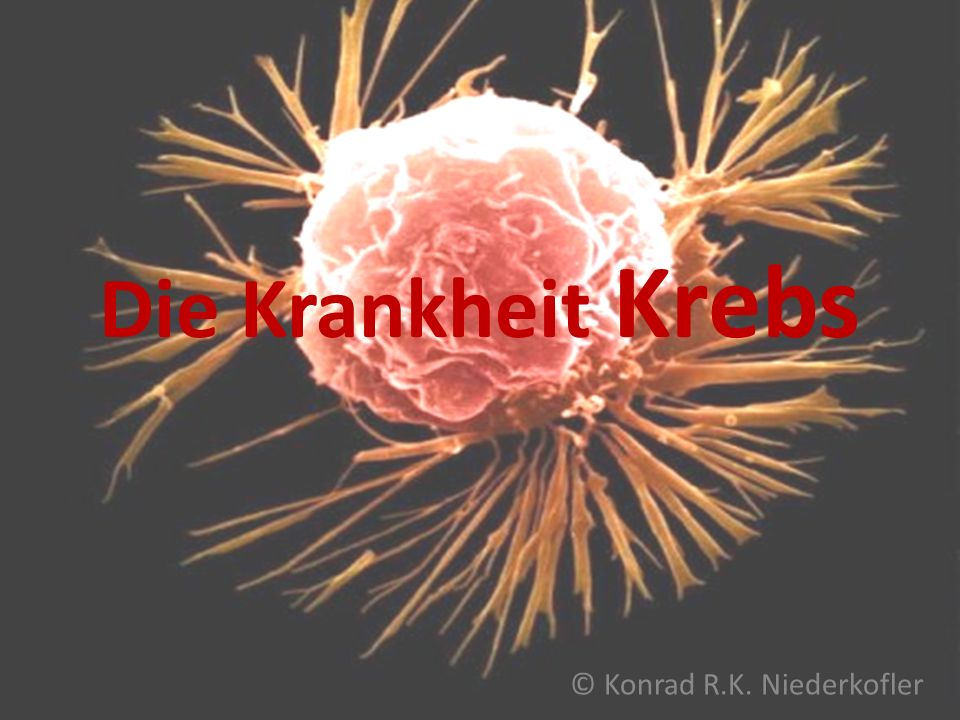 © Konrad R.K. Niederkofler