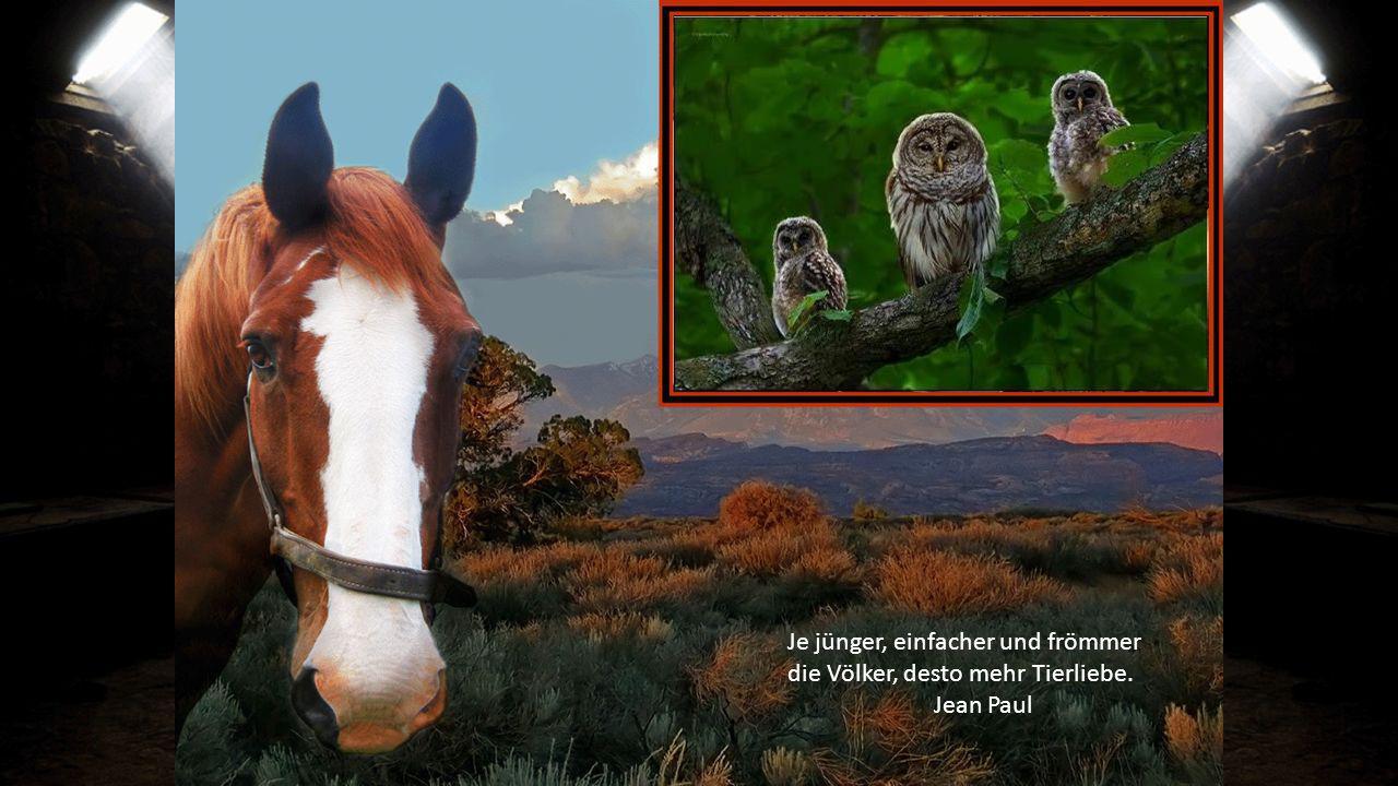 Je jünger, einfacher und frömmer die Völker, desto mehr Tierliebe.