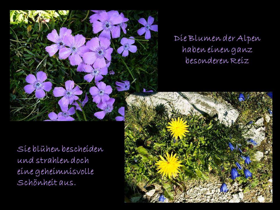 Die Blumen der Alpen haben einen ganz besonderen Reiz