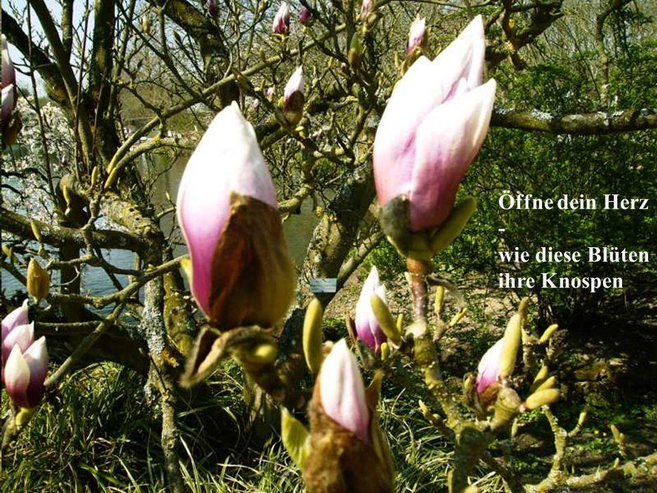 Öffne dein Herz - wie diese Blüten ihre Knospen ©