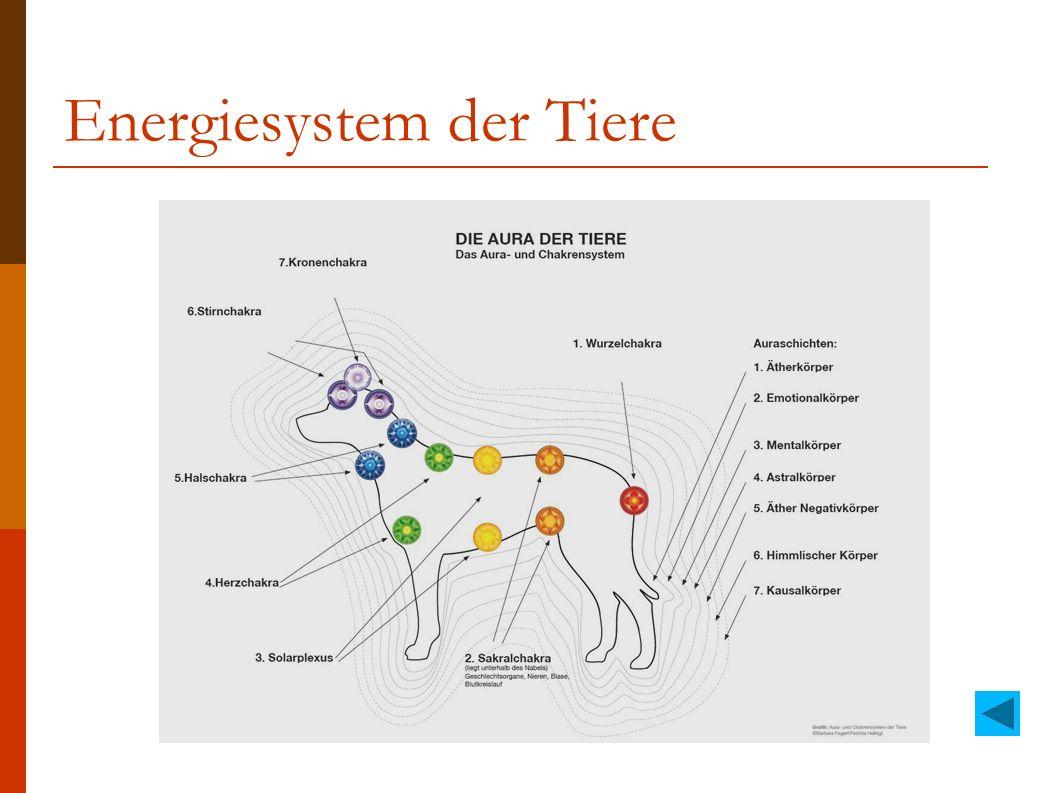 Energiesystem der Tiere