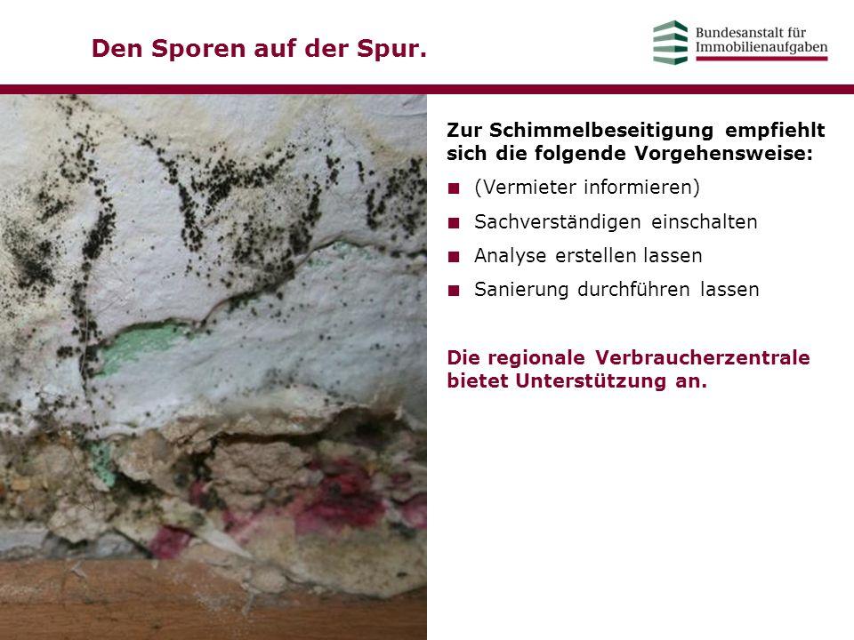 Den Sporen auf der Spur. Zur Schimmelbeseitigung empfiehlt sich die folgende Vorgehensweise: (Vermieter informieren)