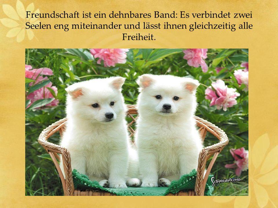 Freundschaft ist ein dehnbares Band: Es verbindet zwei Seelen eng miteinander und lässt ihnen gleichzeitig alle Freiheit.