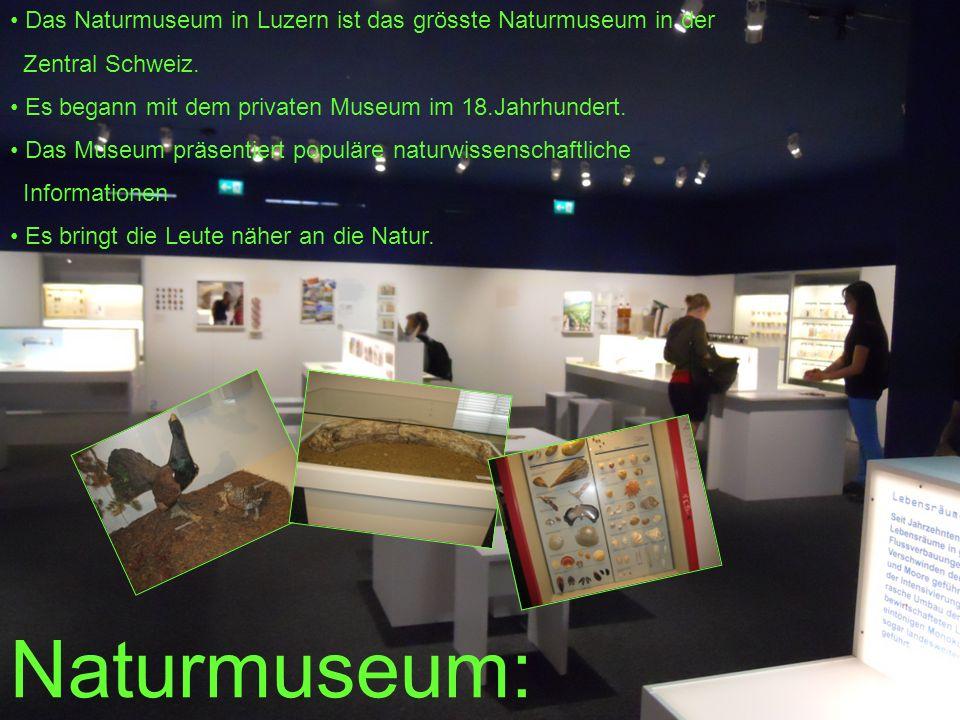 Naturmuseum: Naturmuseum: