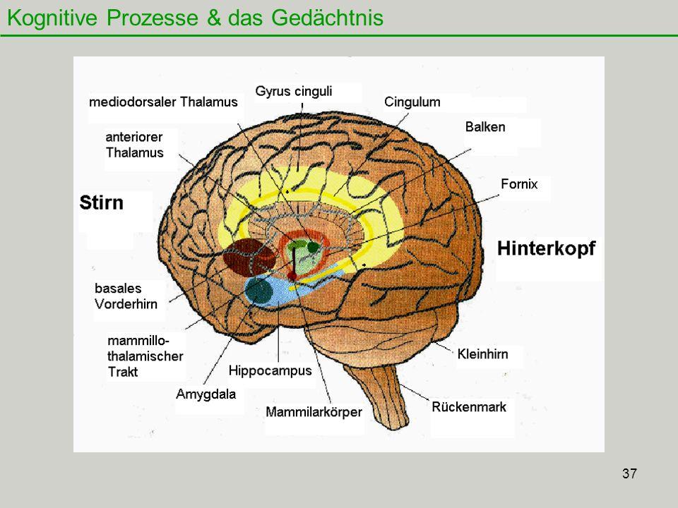 Kognitive Prozesse & das Gedächtnis