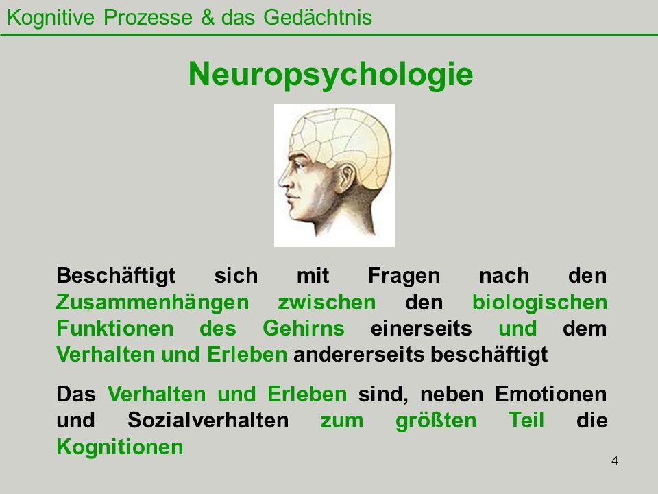 Neuropsychologie Kognitive Prozesse & das Gedächtnis
