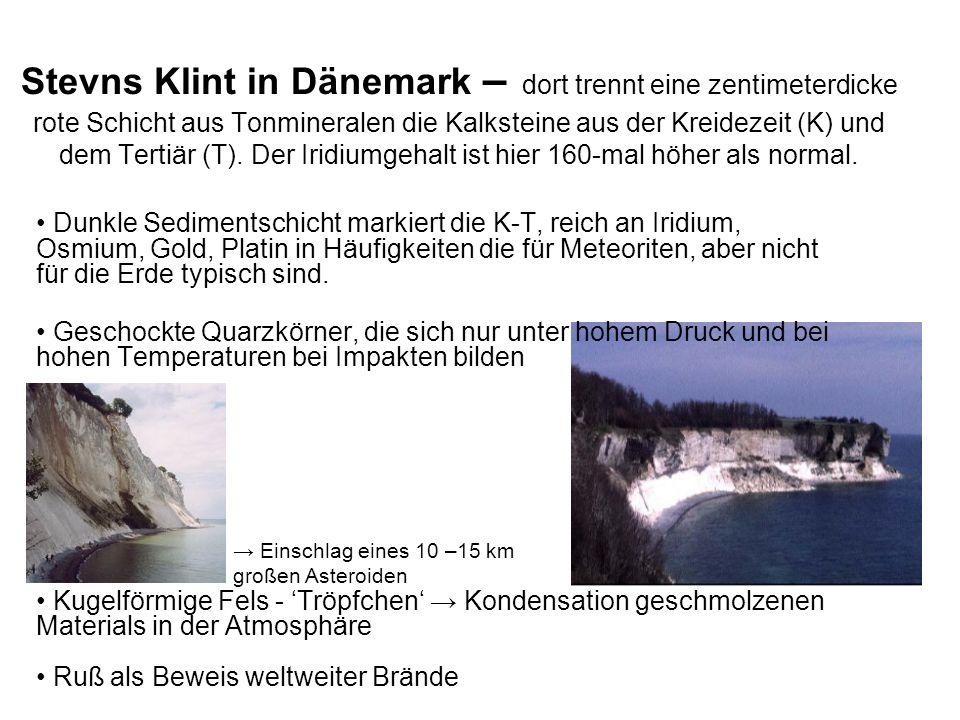 Stevns Klint in Dänemark – dort trennt eine zentimeterdicke rote Schicht aus Tonmineralen die Kalksteine aus der Kreidezeit (K) und dem Tertiär (T). Der Iridiumgehalt ist hier 160-mal höher als normal.