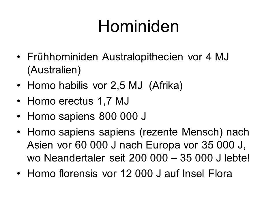 Hominiden Frühhominiden Australopithecien vor 4 MJ (Australien)