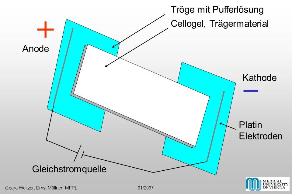 + Tröge mit Pufferlösung Cellogel, Trägermaterial Anode Kathode Platin