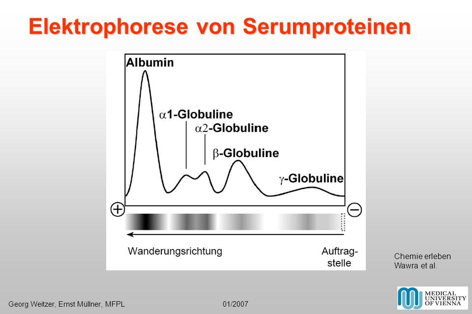 Elektrophorese von Serumproteinen