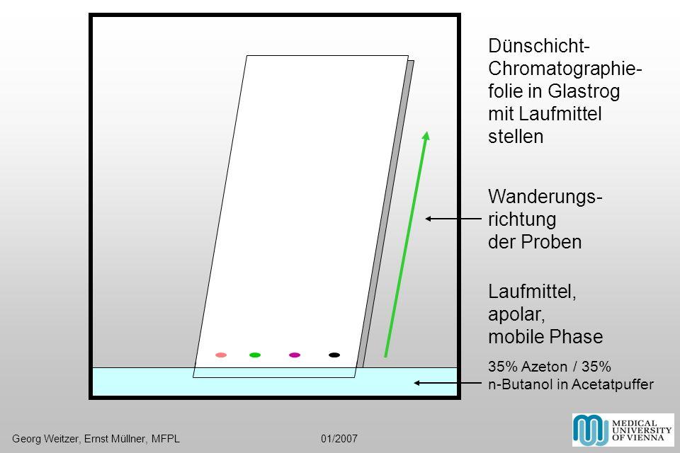 Dünschicht- Chromatographie- folie in Glastrog mit Laufmittel stellen