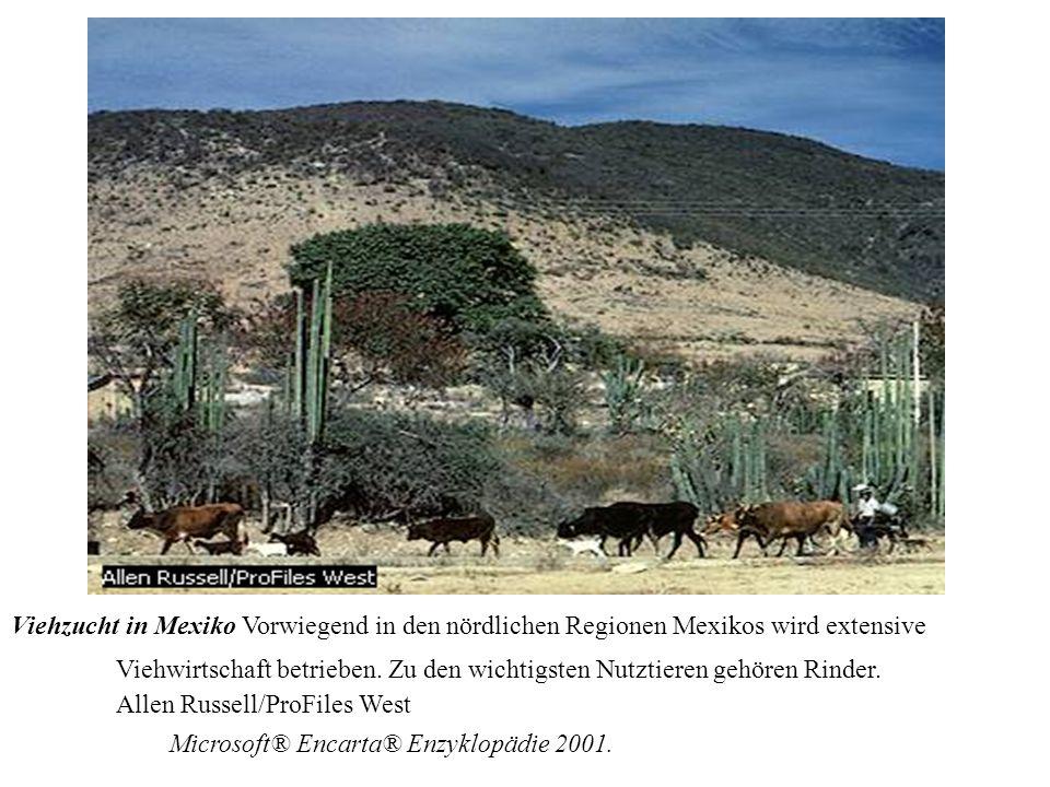 Viehzucht in Mexiko Vorwiegend in den nördlichen Regionen Mexikos wird extensive