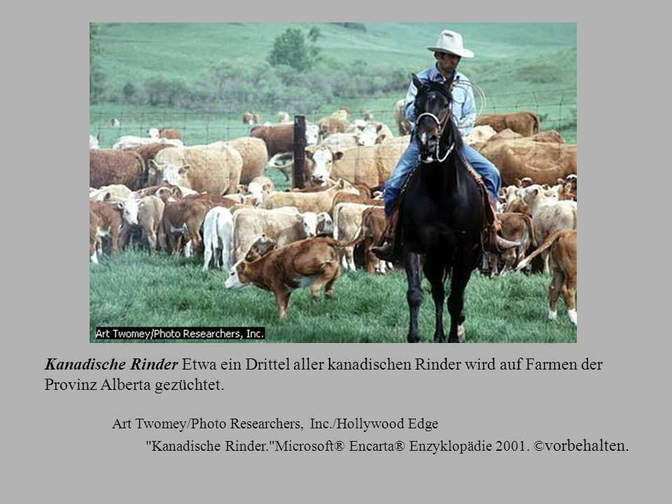 Provinz Alberta gezüchtet.