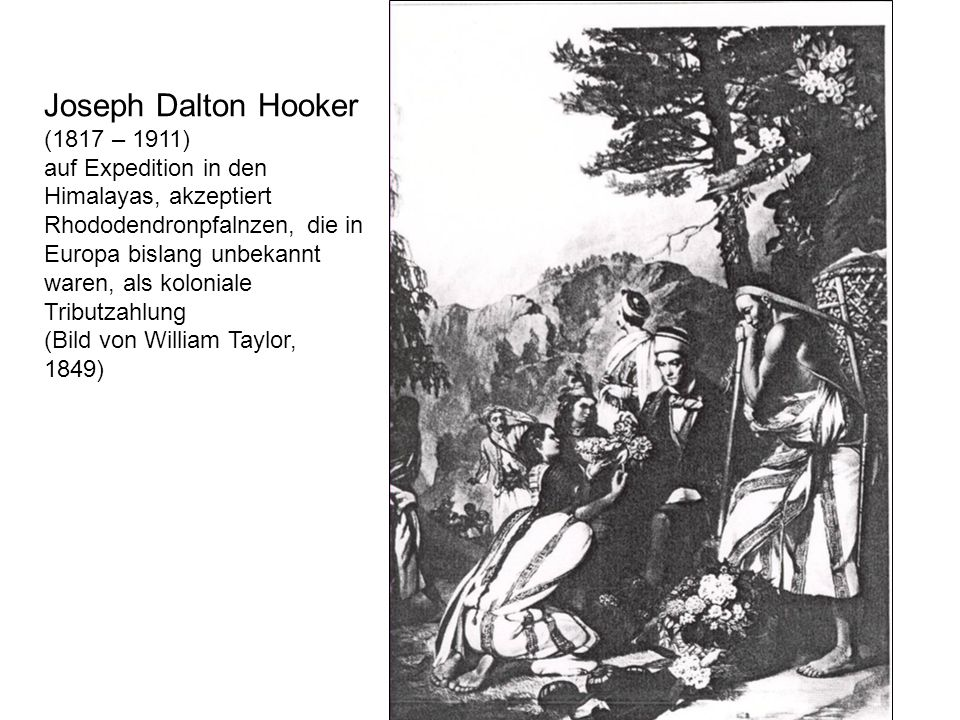 Joseph Dalton Hooker (1817 – 1911) auf Expedition in den