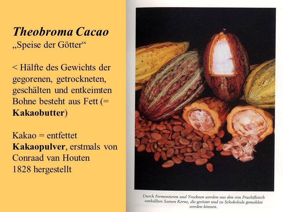 """Theobroma Cacao """"Speise der Götter < Hälfte des Gewichts der"""