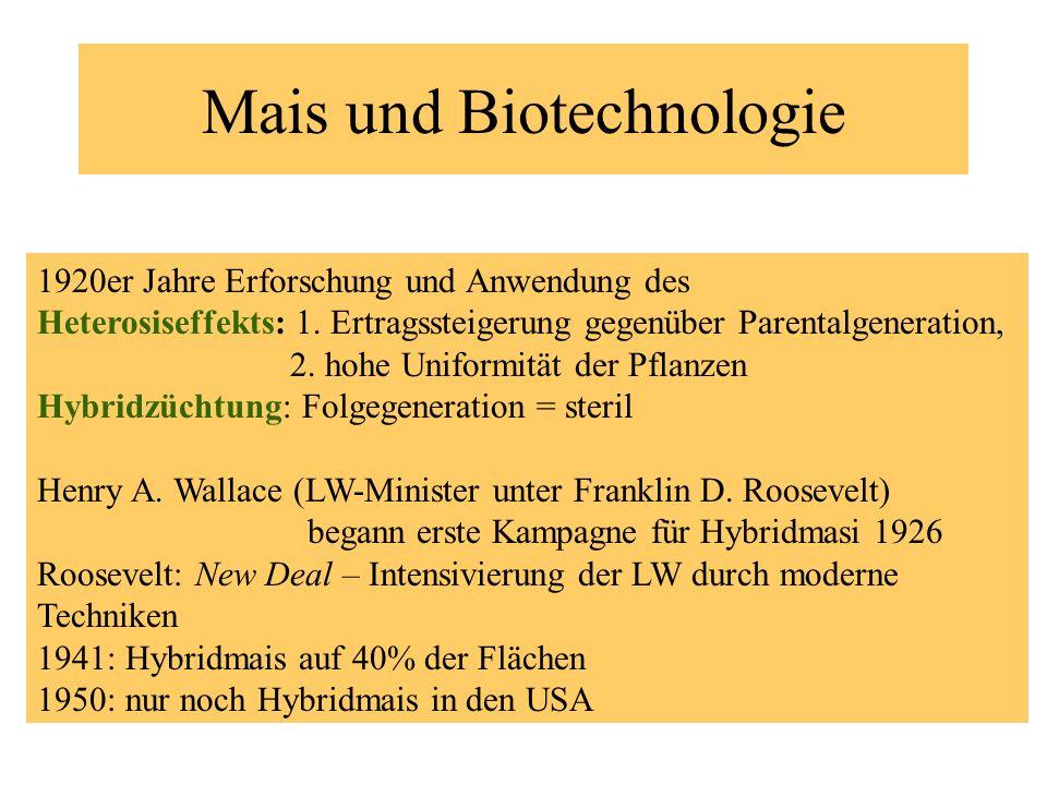 Mais und Biotechnologie