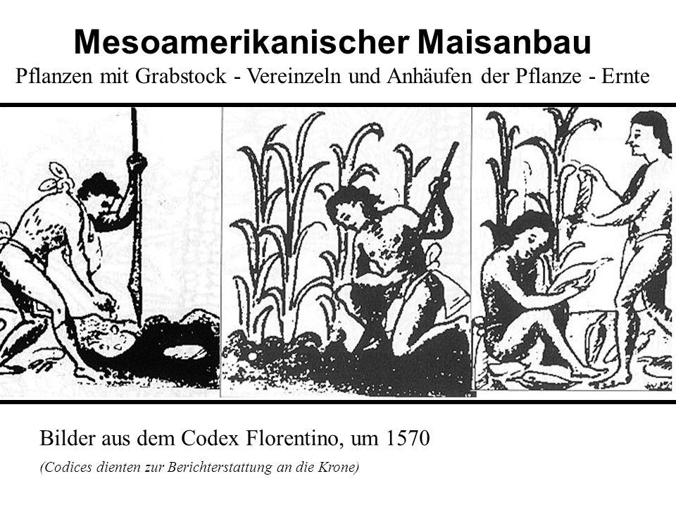 Mesoamerikanischer Maisanbau