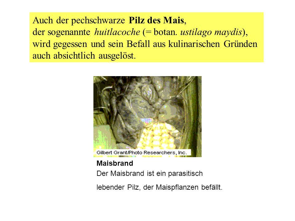 Auch der pechschwarze Pilz des Mais,