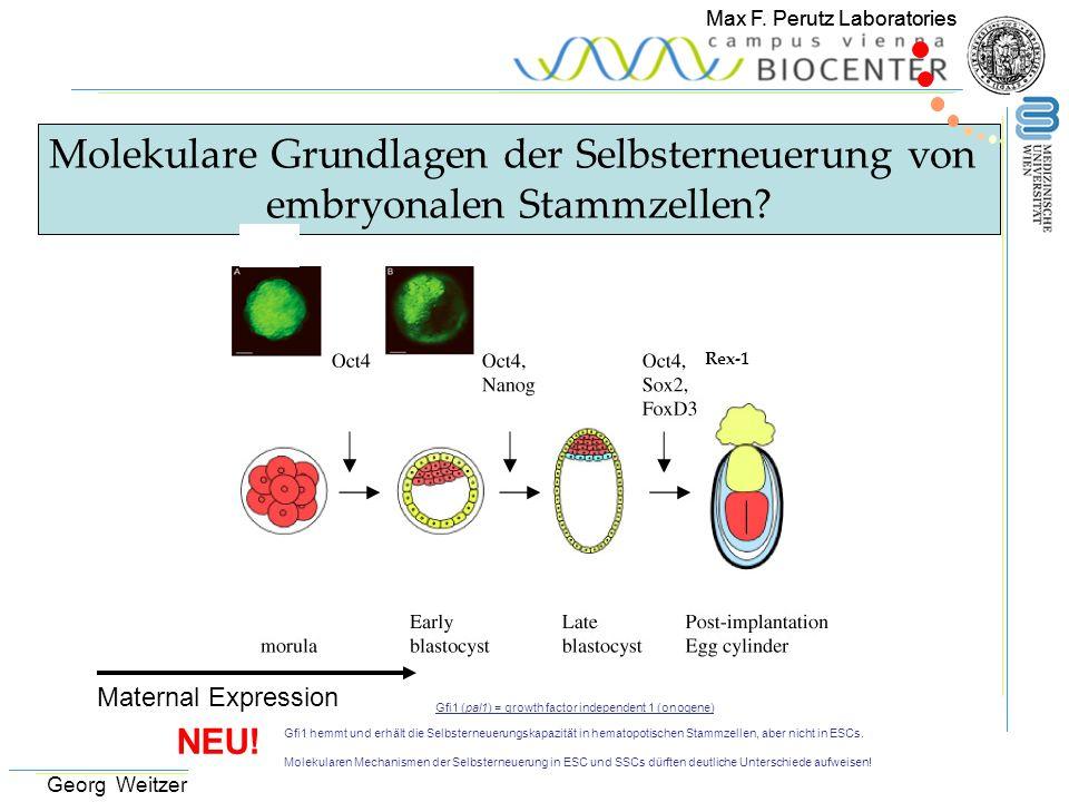 Molekulare Grundlagen der Selbsterneuerung von
