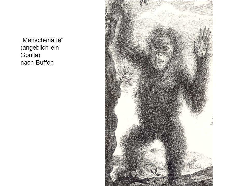 """""""Menschenaffe (angeblich ein Gorilla) nach Buffon"""