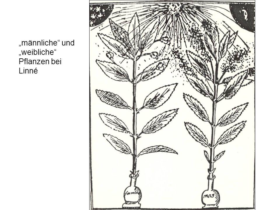 """""""männliche und """"weibliche Pflanzen bei Linné"""