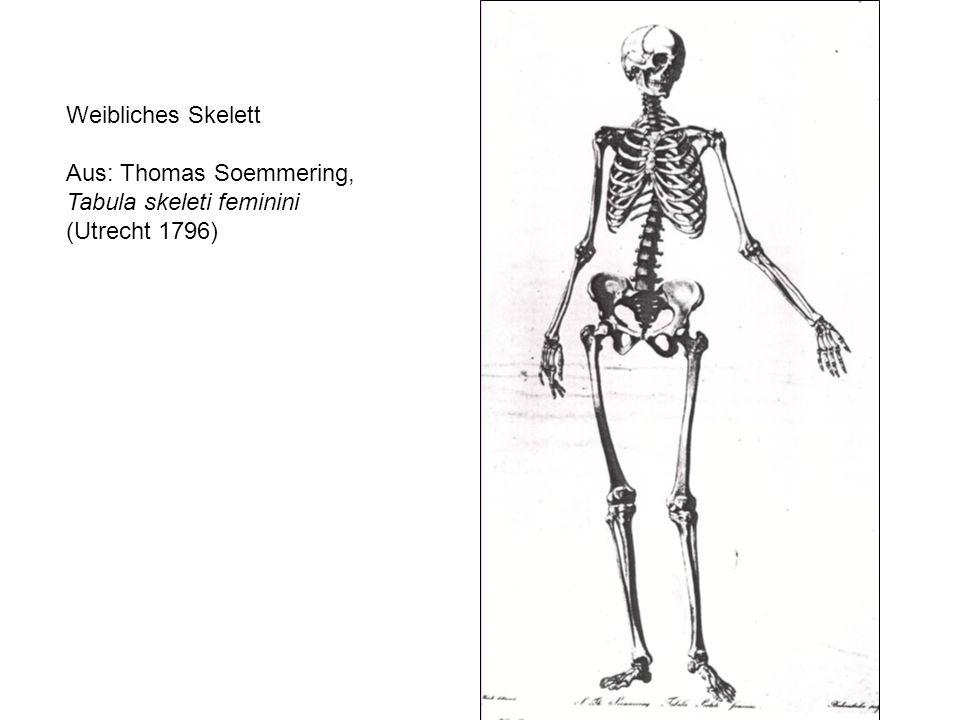 Weibliches Skelett Aus: Thomas Soemmering, Tabula skeleti feminini (Utrecht 1796)