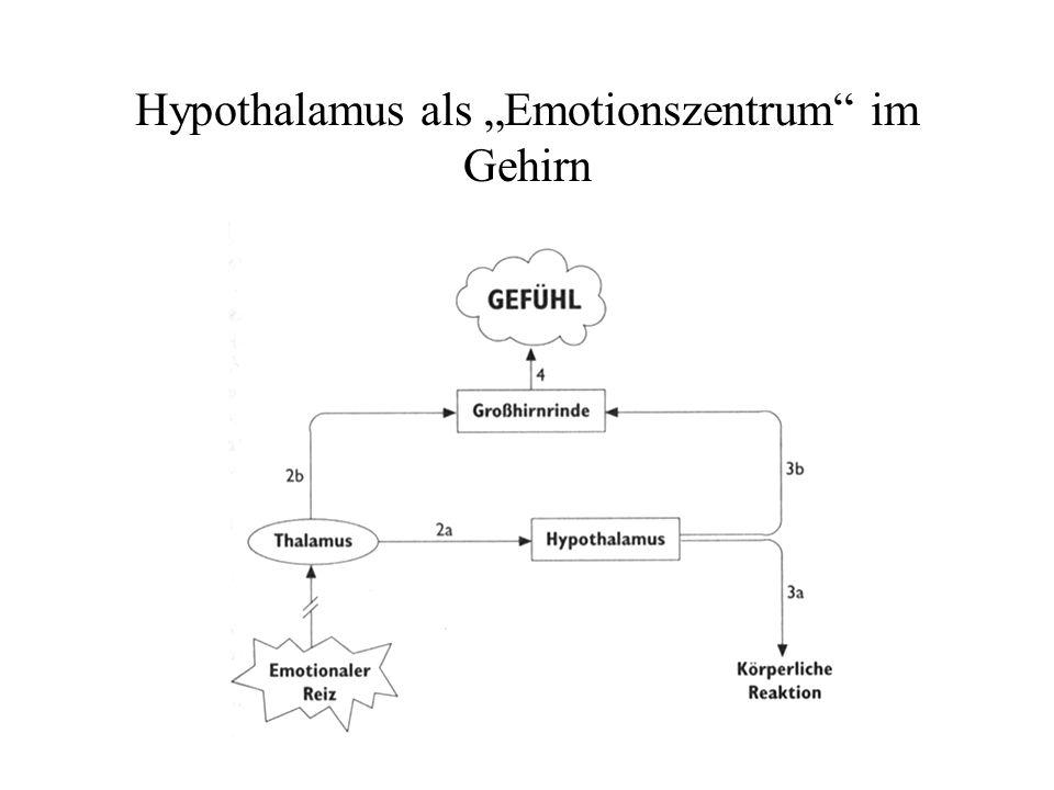 """Hypothalamus als """"Emotionszentrum im Gehirn"""