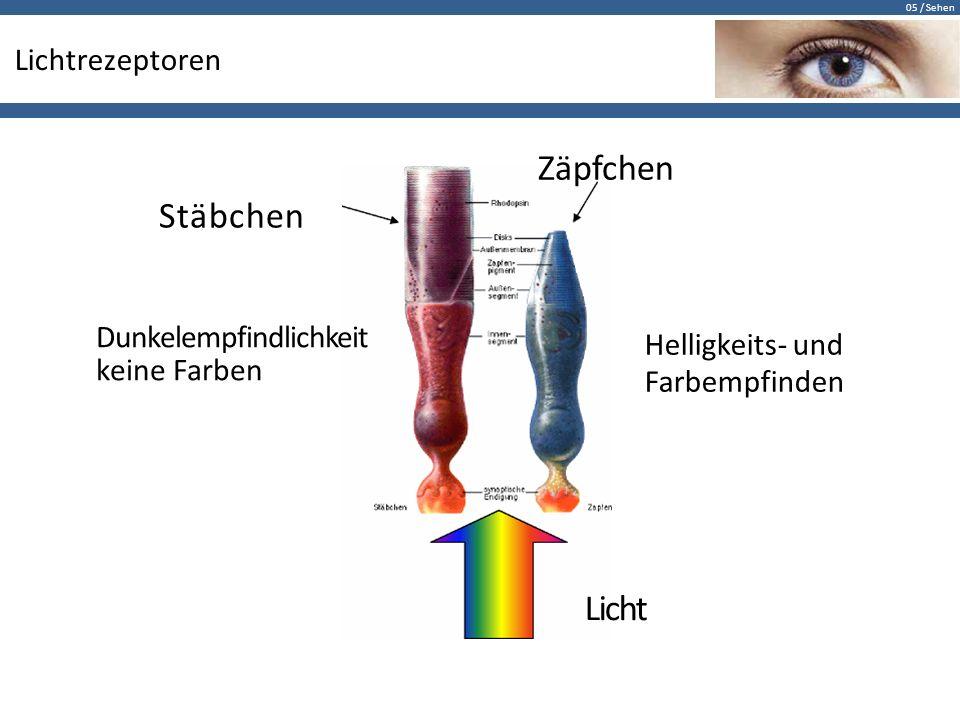 Zäpfchen Stäbchen Licht Lichtrezeptoren Dunkelempfindlichkeit