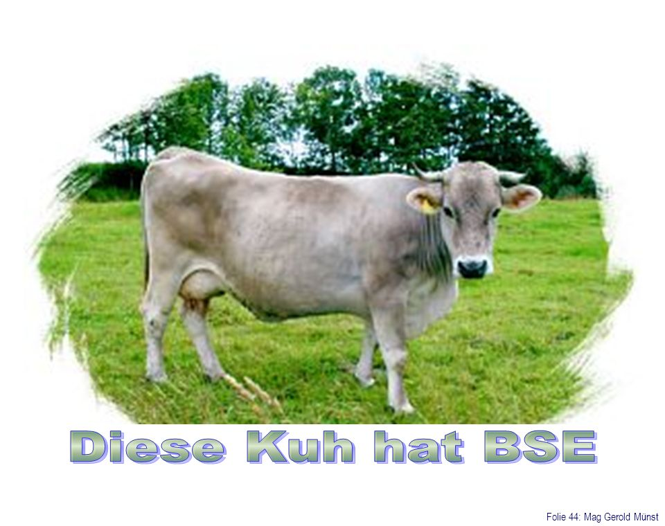 Diese Kuh hat BSE Folie 44: Mag Gerold Münst