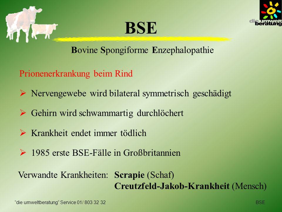 BSE Bovine Spongiforme Enzephalopathie Prionenerkrankung beim Rind