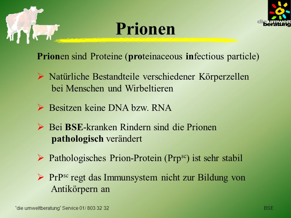 Prionen Prionen sind Proteine (proteinaceous infectious particle)