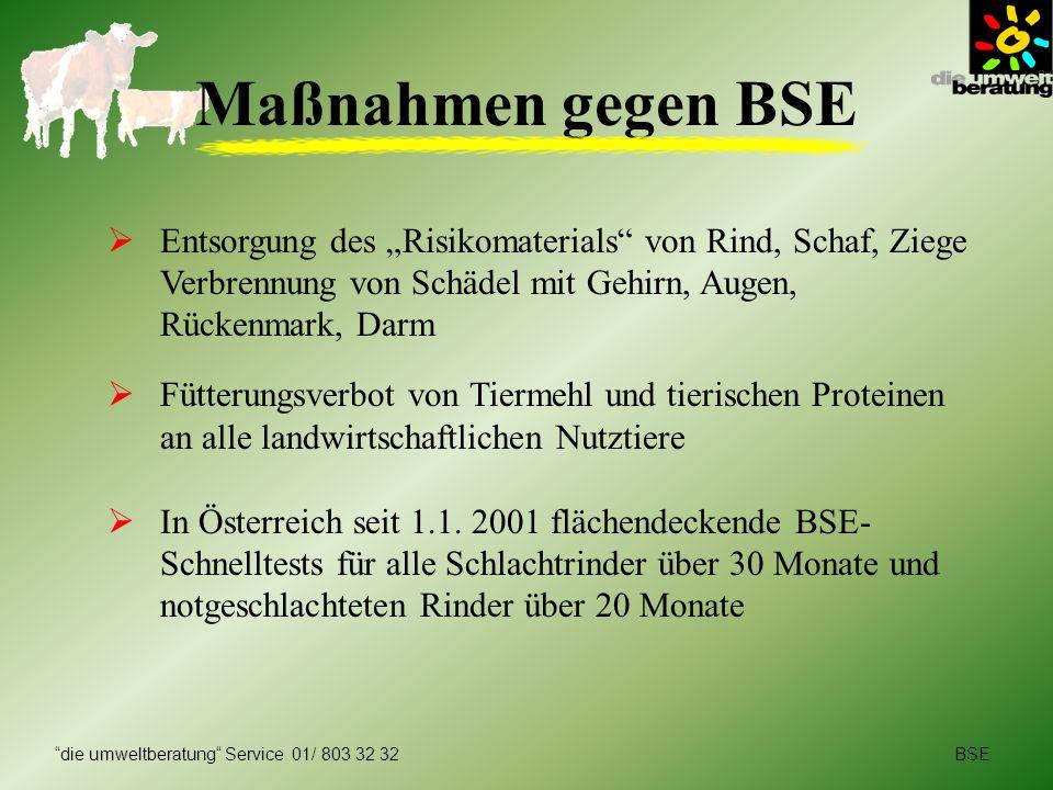 """Maßnahmen gegen BSE Entsorgung des """"Risikomaterials von Rind, Schaf, Ziege Verbrennung von Schädel mit Gehirn, Augen,"""