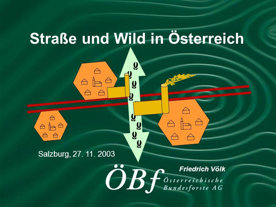 Straße und Wild in Österreich