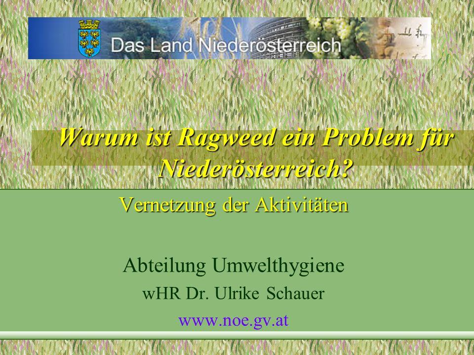 Warum ist Ragweed ein Problem für Niederösterreich
