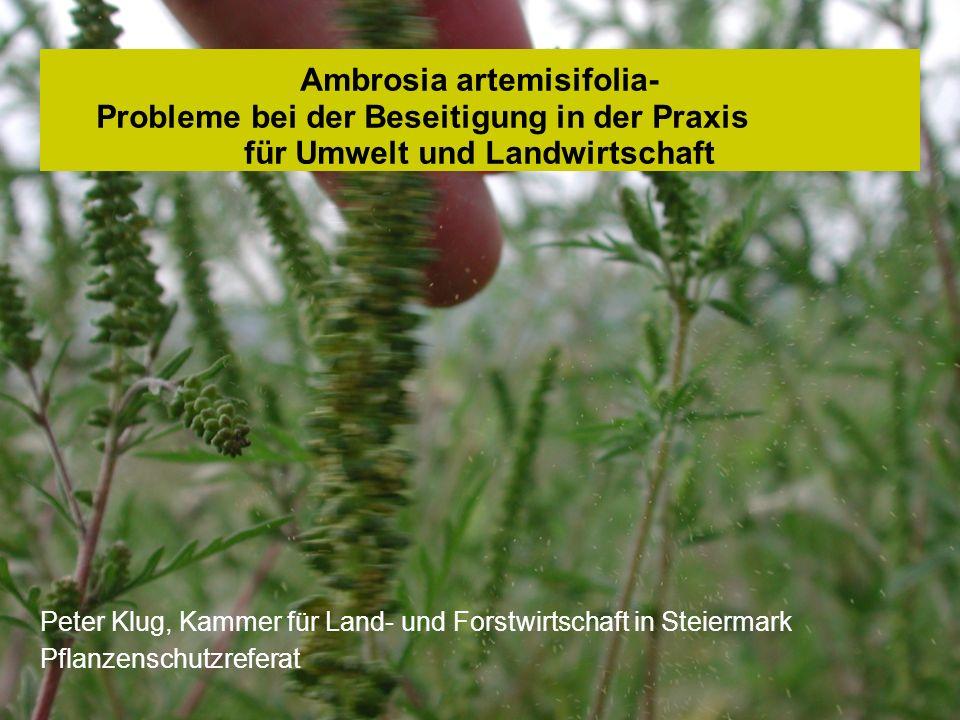 Ambrosia artemisifolia- Probleme bei der Beseitigung in der Praxis