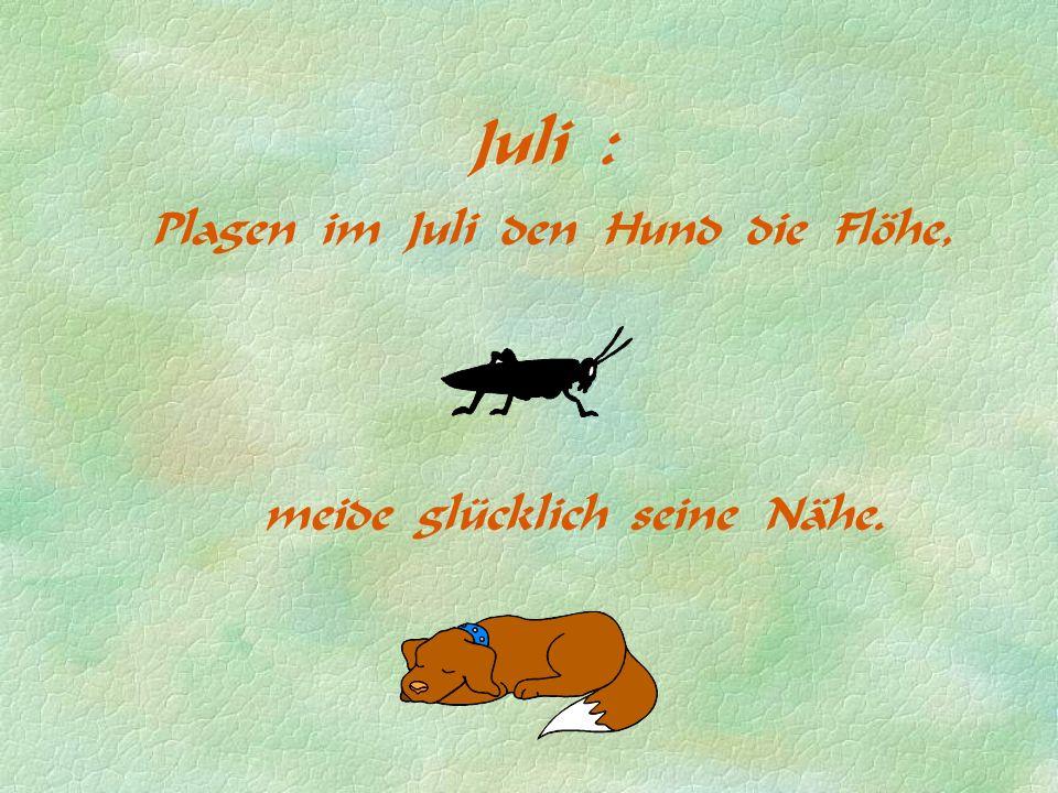 Juli : Plagen im Juli den Hund die Flöhe, meide glücklich seine Nähe.